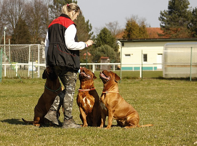 výcvik dvou psů