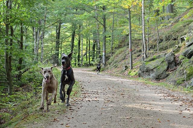 běžící psy