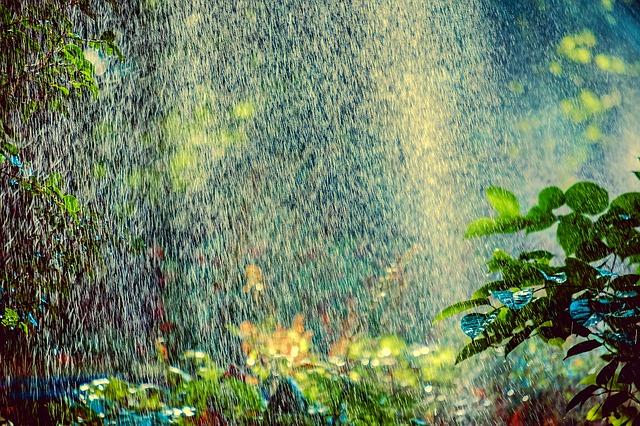 rostliny v dešti